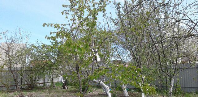 Дача на продажу по адресу Россия, Краснодарский край, городской округ Анапа, садоводческое некоммерческое товарищество Автомобилист